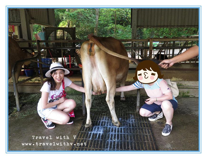 飛牛牧場 ANIMAL 12