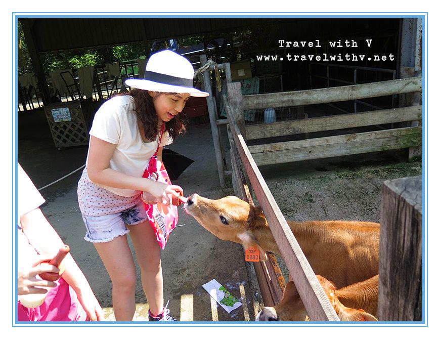 飛牛牧場 ANIMAL 1